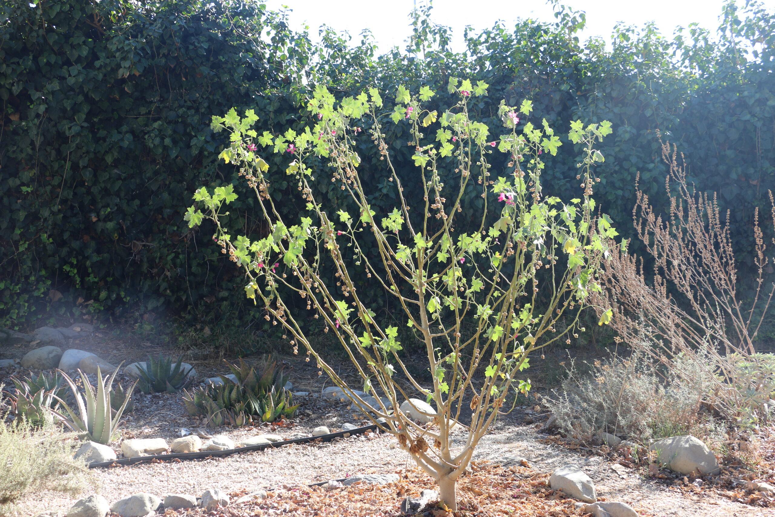 Springs medicine graden flowered tree